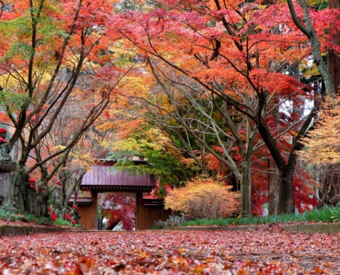 The autumnal tints of Konzo-in Temple, Tochigi